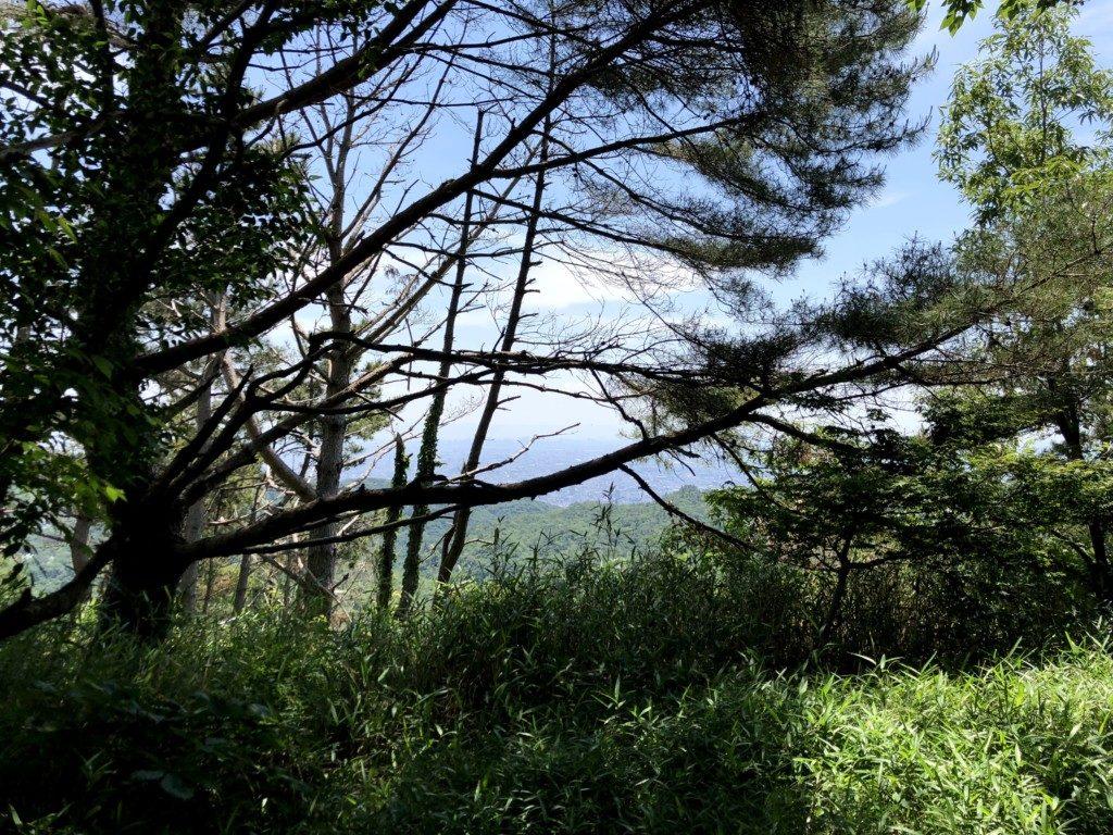 雨ヶ峠から東おたふく山へ