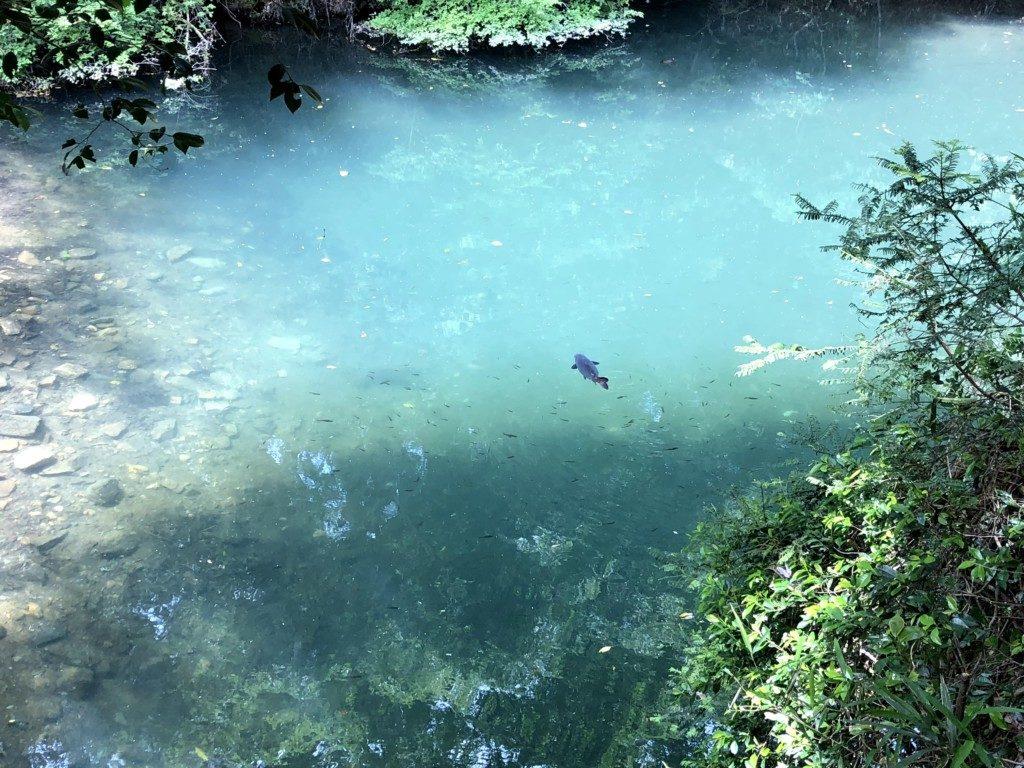 池の巨大魚