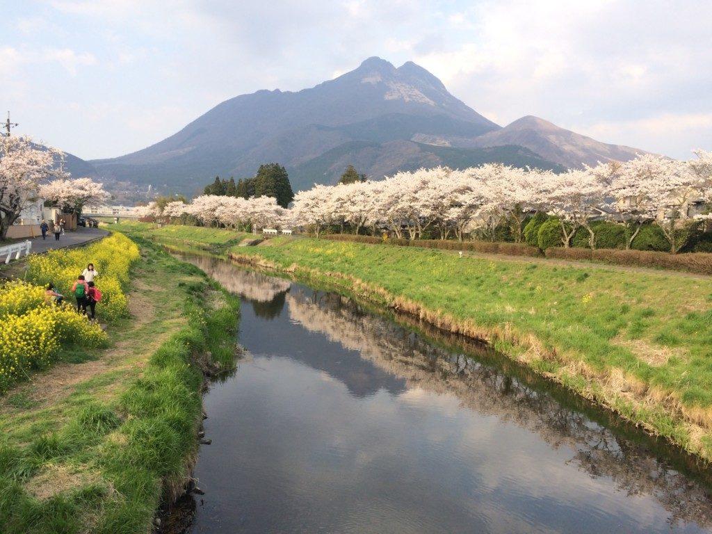 桜と菜の花に彩られた由布院