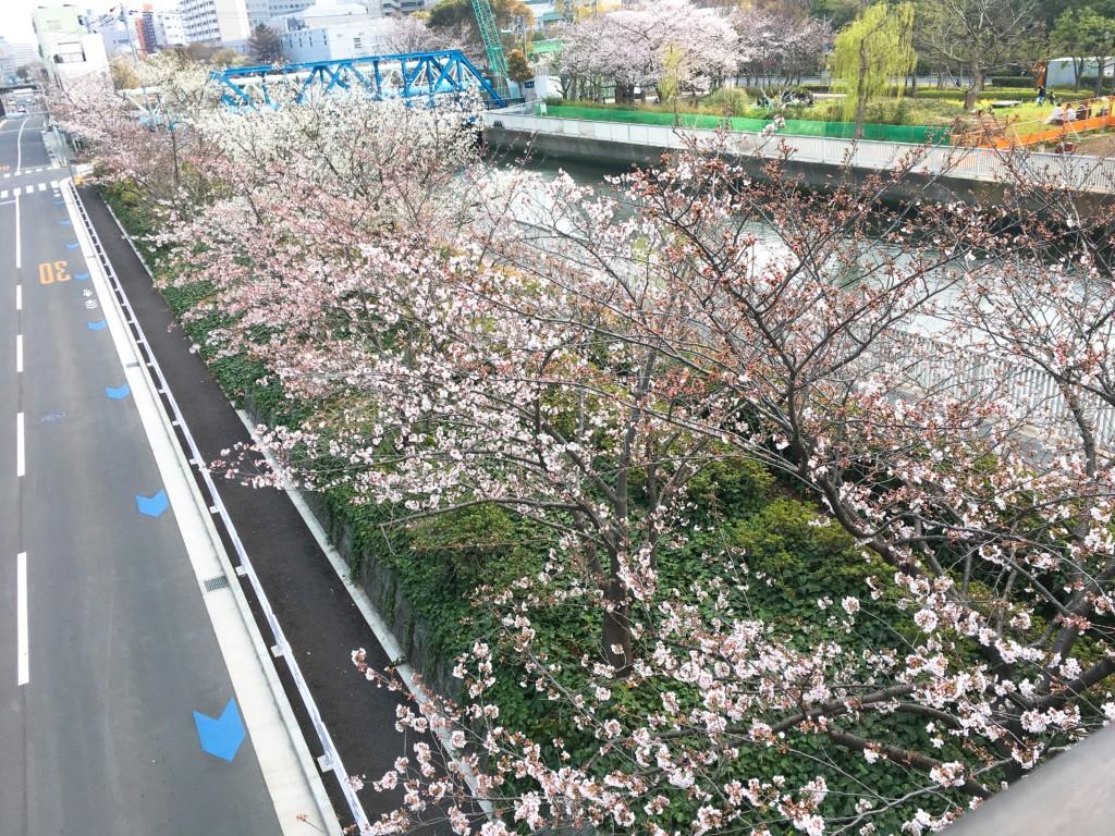 橋から見た景色1