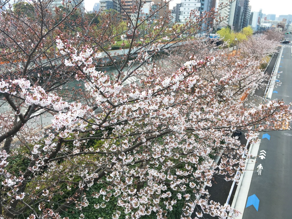 橋から見た景色2